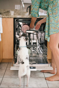 Barefoot woman and white dog standing in front of an open dishwasher in a kitchen.の写真素材 [FYI02253317]