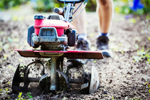 A man using a rotivator on soil in flowers beds in an organic garden.の写真素材 [FYI02253510]
