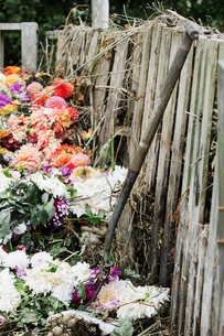 A compost bin made of old wooden pallets, with dead flowers, garden waste and soil.の写真素材 [FYI02253625]