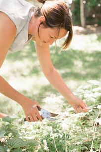 Woman gardening, cutting white flowers with secateurs.の写真素材 [FYI02253650]