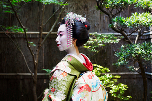 A woman dressed in the traditional geisha style, wearing a kimono and obi, with an elaborate hairstyの写真素材 [FYI02253808]