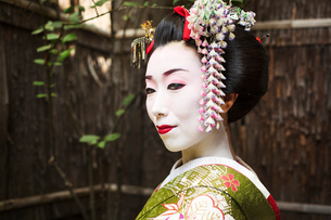 A woman dressed in the traditional geisha style, wearing a kimono and obi, with an elaborate hairstyの写真素材 [FYI02254070]