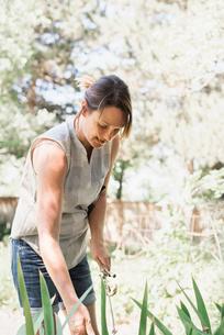 Woman standing in a garden, gardening.の写真素材 [FYI02254109]