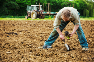 A man bending, using a trowel, planting a small seedling in the soil.の写真素材 [FYI02254118]