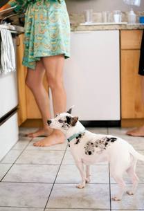 Barefoot woman and white dog standing in a kitchen.の写真素材 [FYI02254348]