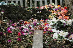 A compost bin made of old wooden pallets, with dead flowers, garden waste and soil.の写真素材 [FYI02254501]