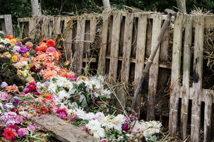 A compost bin made of old wooden pallets, with dead flowers, garden waste and soil.の写真素材 [FYI02254524]