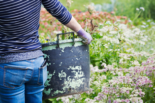 A woman carrying a large garden bucket through flowers in a flowering bed.の写真素材 [FYI02254541]
