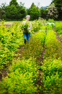 A florist selecting flowers and plants from the garden to create an arrangement. Organic garden.の写真素材 [FYI02254998]