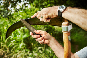 A gardener working sharpening a curved metal scythe blade with a file.の写真素材 [FYI02255059]