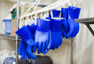 Row of blue plastic gloves hanging on hooks in a brewery.の写真素材 [FYI02255129]