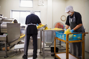 Workers in aprons and hats collecting freshly cut noodles from the conveyor belt to package and sellの写真素材 [FYI02255194]