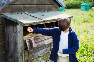 A boy collecting eggs from the henhouse coop.の写真素材 [FYI02255412]