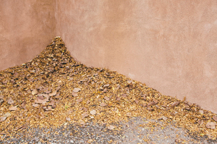 Autumn leaves heaped up in a corner by a building.の写真素材 [FYI02255474]