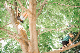 Two children, brother and sister climbing a tree.の写真素材 [FYI02255529]