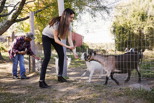 A young woman an a man crouching down and feeding a group of goats through a wire fence.の写真素材 [FYI02255550]