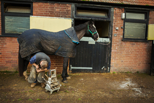 A farrier shoeing a horse, bending down and fitting a new horseshoe to a horse's hoof.の写真素材 [FYI02255606]