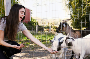 A young woman crouching down and feeding a group of goats through a wire fence.の写真素材 [FYI02255609]