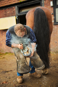 A farrier shoeing a horse, bending down and fitting a new horseshoe to a horse's hoof.  Steam from tの写真素材 [FYI02255634]