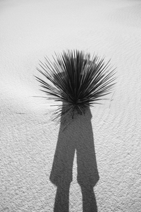 Photographer's self portrait and shadow on sand dune and yucca, White Sands National Parkの写真素材 [FYI02255660]