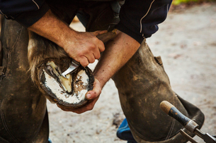 A farrier shoeing a horse, bending down and fitting a new horseshoe to a horse's hoof.の写真素材 [FYI02255665]