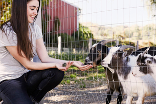 A young woman crouching down and feeding a pair of goats through a wire fence.の写真素材 [FYI02255705]