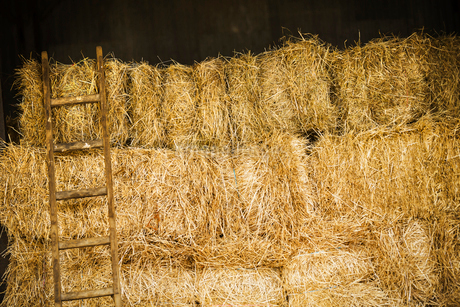 A stack of hay bales with a ladder.の写真素材 [FYI02255827]
