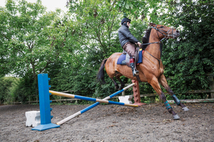 Man riding a bya horse in a paddock, jumping a hurdle.の写真素材 [FYI02255855]
