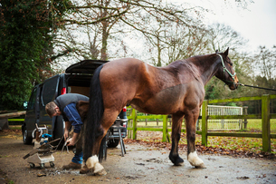 A farrier shoeing a horse, bending down and fitting a new horseshoe to a horse's hoof.の写真素材 [FYI02255871]