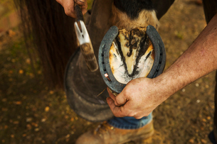 A farrier with a hammer fitting a new horseshoe.の写真素材 [FYI02255877]