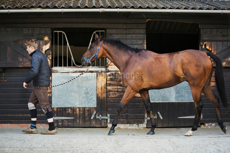 A young man in a stable yard with a bay horse on a leading rein.の写真素材 [FYI02255914]