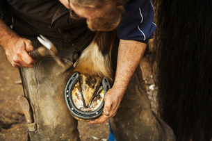A farrier shoeing a horse, bending down and fitting a new horseshoe to a horse's hoof.の写真素材 [FYI02255956]