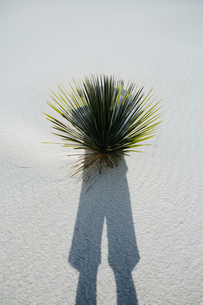 Photographer's self portrait and shadow on sand dune and yucca, White Sands National Parkの写真素材 [FYI02256002]