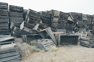 Pile of old and discarded wooden fruit crates, boxes for apple harvestの写真素材 [FYI02256117]