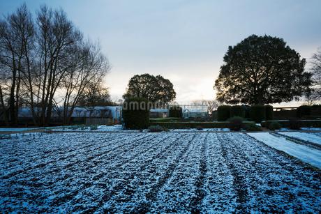 The garden in winter at Le Manoir aux Quat'Saisons, Oxfordshire.の写真素材 [FYI02256301]