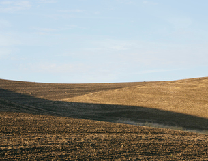 Harvested wheat field  and rolling hills, Palouse, Washingtonの写真素材 [FYI02256332]