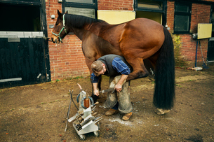 A farrier shoeing a horse, bending down and fitting a new horseshoe to a horse's hoof.の写真素材 [FYI02256417]