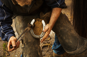 A farrier shoeing a horse, bending down and fitting a new horseshoe to a horse's hoof.の写真素材 [FYI02256420]