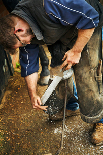 A farrier filing the hoof of a horse he is shoeing.の写真素材 [FYI02256432]