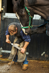 A farrier filing the hoof of a horse he is shoeing.の写真素材 [FYI02256436]