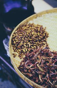The Damnoen Saduak Floating Market, a tray of fried grasshoppers and larva for sale at floating markの写真素材 [FYI02256495]