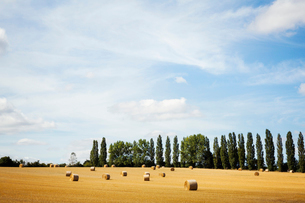 A field of stubble, with round straw bales, and a line of poplar treesの写真素材 [FYI02256652]