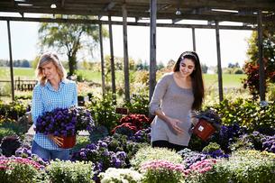 Two women choosing flowering plants at a garden centre.の写真素材 [FYI02256721]