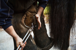 A farrier shoeing a horse, bending down and fitting a new horseshoe to a horse's hoof.の写真素材 [FYI02256935]