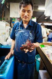 A traditional fresh fish market in Tokyo. a man holding out a lionfish, a fresh fish with venomous sの写真素材 [FYI02256972]
