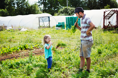 A man and a girl eating freshly harvested carrots in a vegetable patch.の写真素材 [FYI02256991]