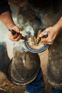 A farrier shoeing a horse, bending down and fitting a new horseshoe to a horse's hoof.の写真素材 [FYI02257129]