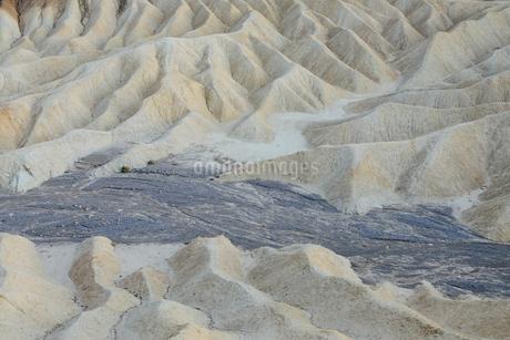 Zabriskie Point at dawn, Death Valley National Park, USA.の写真素材 [FYI02257153]