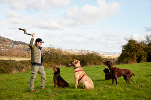 Dog walker, a man with his arm raised to throw a stick for three dogs.の写真素材 [FYI02257158]