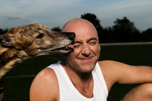 Bald man in white vest sitting on racetrack, brindle greyhound licking his face.の写真素材 [FYI02257367]